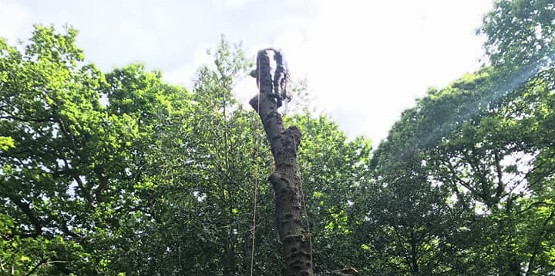 tree surgeon Dorking