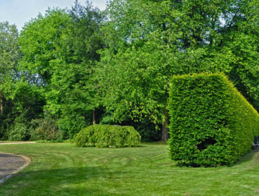 Hedge Trimming Services Guildford