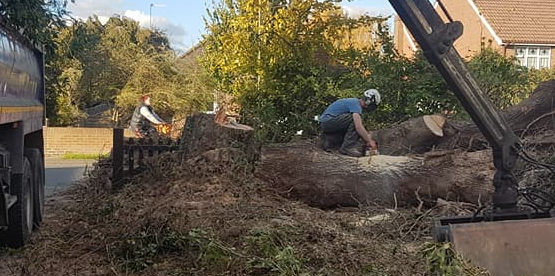tree removal Shepperton