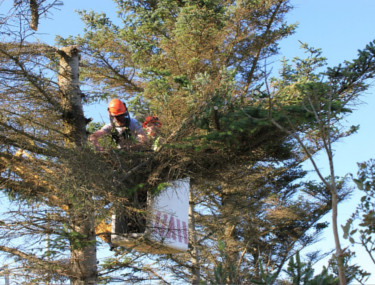 local tree felling company Bagshot