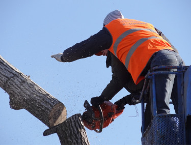 tree felling company Guildford